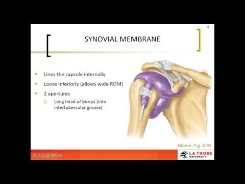 2 Glenohumeral Joint Capsule & Ligaments - YouTube