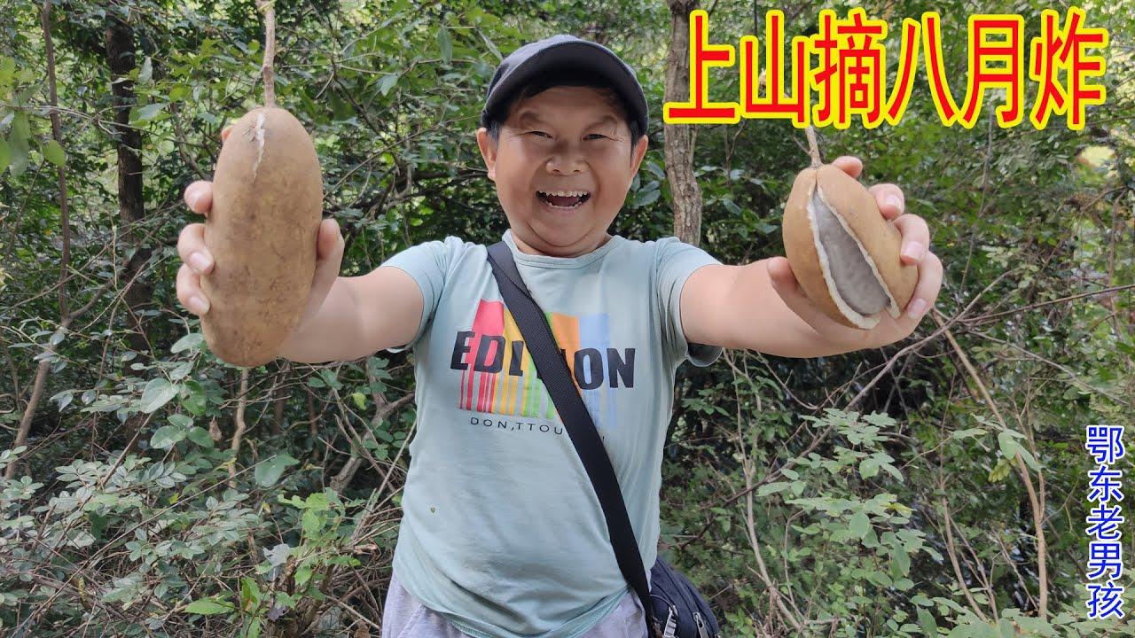 老男孩惦記山上的八月炸和獼猴桃,跟著表哥上山,果然收穫不少