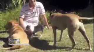 Best Dog Training Online - Learn How To Train Your Dog From The Begining
