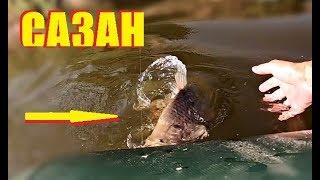 Фееричная рыбалка! Рыбалка на карпа и сома на Ахтубе с ночевкой. Астрахань 2018