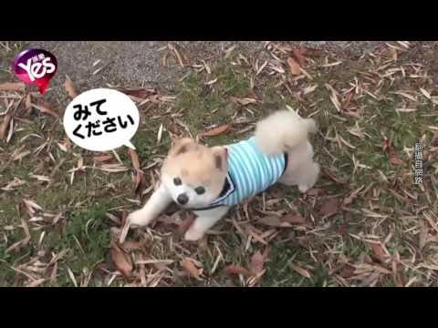 【3年前】昆凌的傲嬌萌寶貝 毛小孩賣萌出道 thumbnail