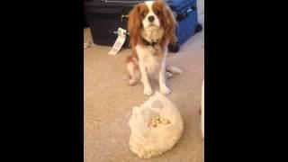 Hazel Eating Popcorn