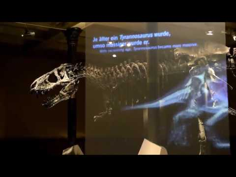Case Study  -  T.rex  -  Natural history museum of Berlin