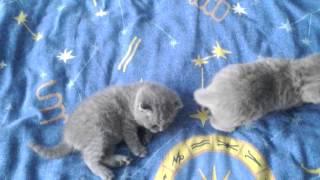Котята 3 недели
