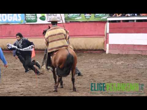 """EligeVeganismo salta a """"Rodeo de las tradiciones"""", Semana de la Chilenidad 2012."""