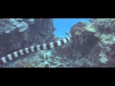 смотреть кино про океаны