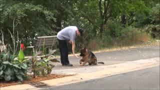 Samson (german Shepherd) Dog Training Boot Camp Video