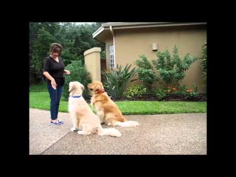Dog Training using Hand Signals