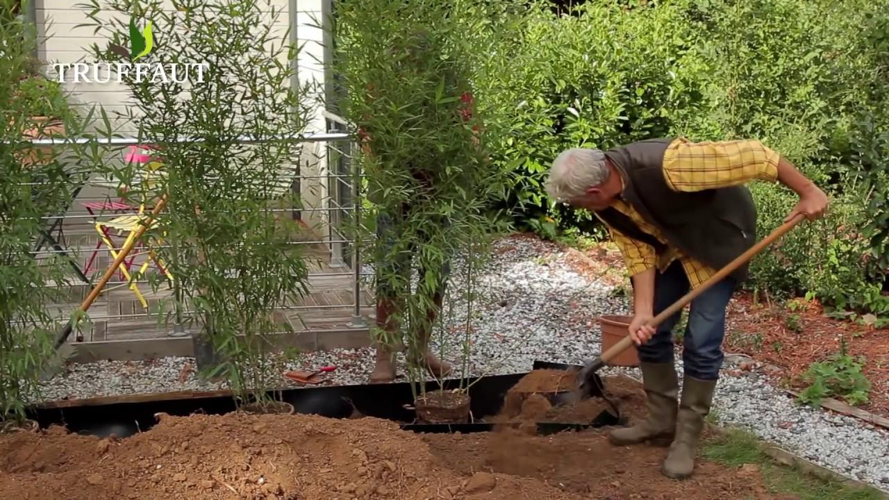 creer une haie de bambous au jardin truffaut