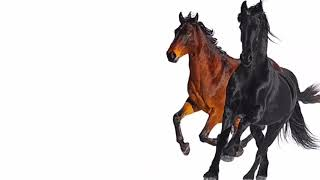 Old Town Road by LiL Nas X but backwards