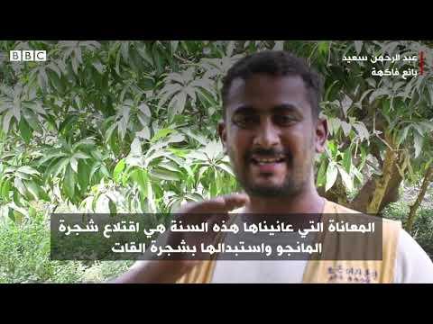 أنا الشاهد: لماذا يفضل مزارعون يمنيون شجرة القات على شجرة المانجو  - نشر قبل 1 ساعة