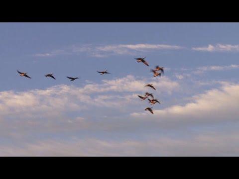 Canada Goose' 2015 8 series