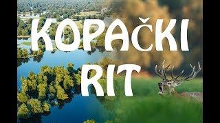 Park prirode / Nature Park Kopački rit in Croatia
