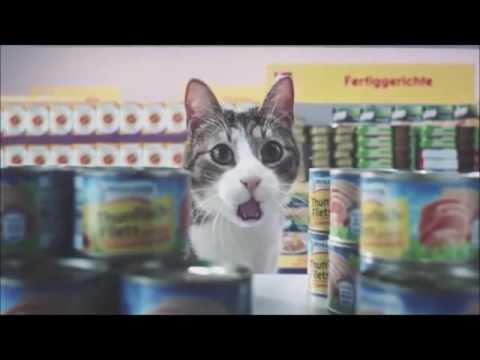 Los gatos hacen la compra en el supermercado