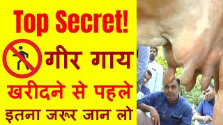 गीर गाय खरीदना चाहते है तो यह जरूर जाने | Gir Cow - Must know before you buy