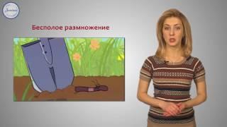 Биология 7 Тип Кольчатые черви  Класс Многощетинковые