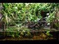 Paludarium update and bombina orientalis