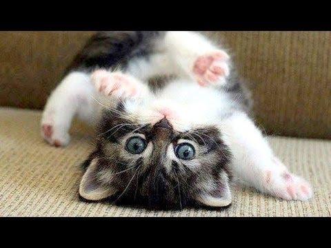 Katter Är Bara Bäst - Rolig Katt Sammanställning