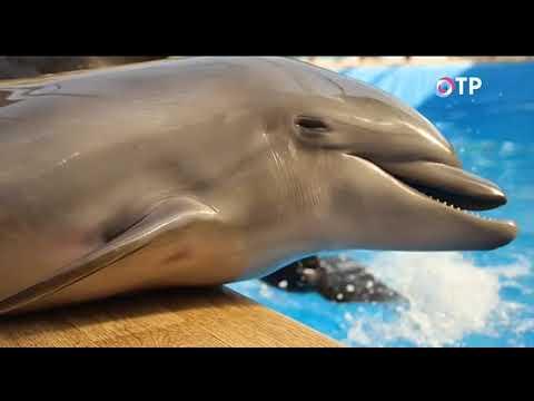 Легенды Крыма. Тайны черноморских дельфинов