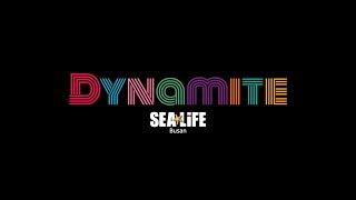 [SEA LiFE 부산아쿠아리움] BTS 'Dy…