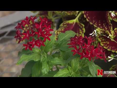 Red Ornamentals