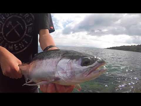 spin fishing lake taupo