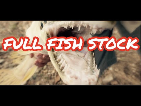 1000 + FISH IN STOCK *EVERY FISH IN STORE* TOUR
