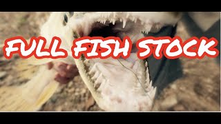 1000-fish-in-stock-every-fish-in-store-tour