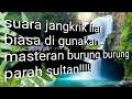 Suara Jangkrik Masteran   Mp3 - Mp4 Download