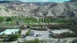 China Ranch Date Farm near Tecopa, CA