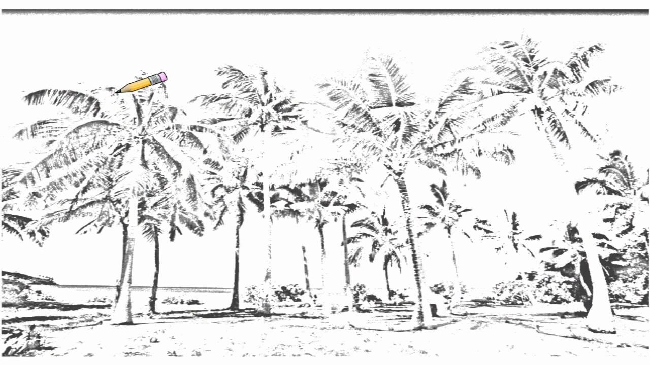 Auto Draw 2 Coconut Palms Taunga Island Vavau Island