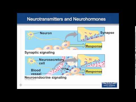 01 Endocrine & Cell Comm Intro to Communication