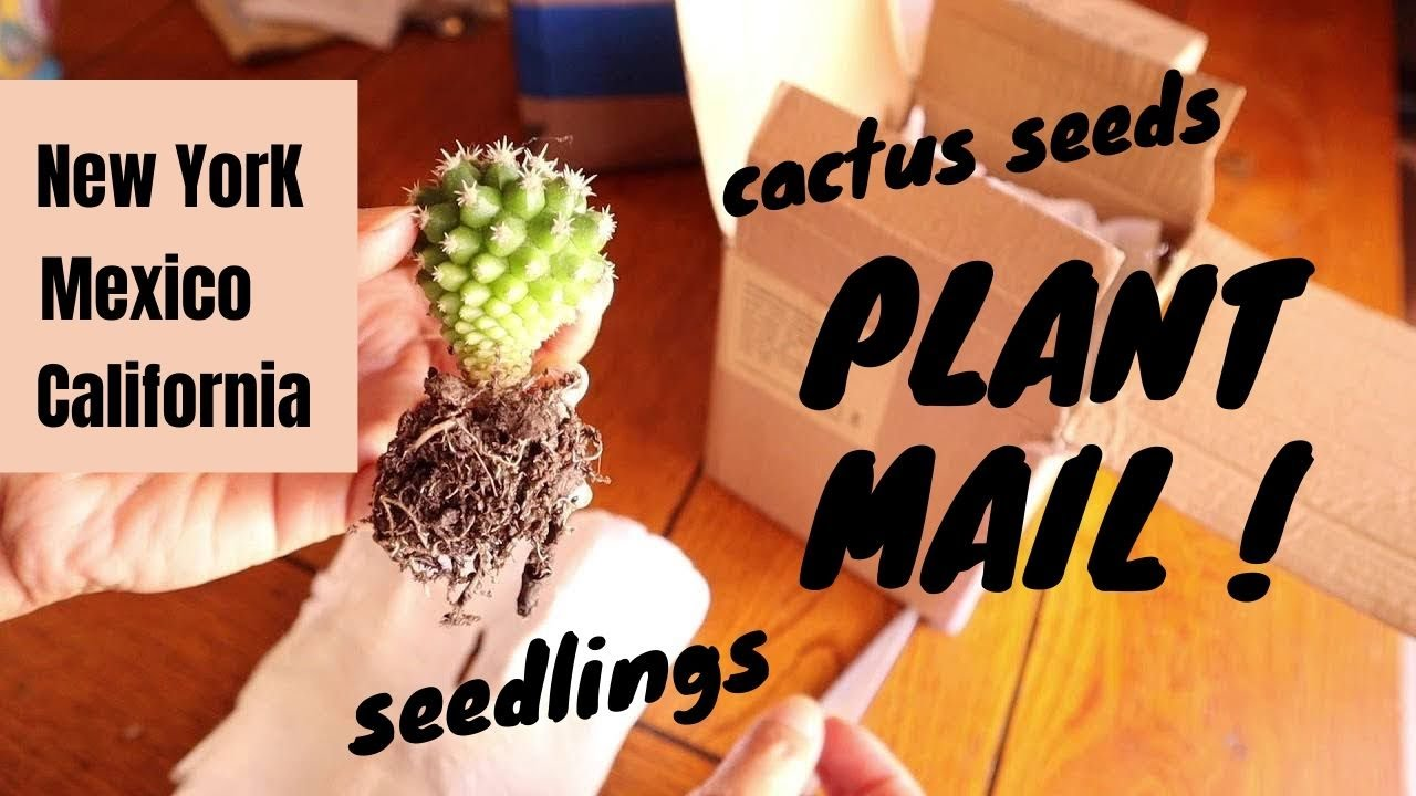 Plant Mail: Cactus Seeds and Seedlings from Jacobo, Herminia and Georgiana