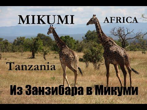 Cафари из Занзибара в Микуми/Дар-Эс-Салам - парк Микуми - животные Африки
