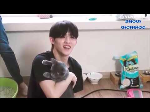 soft seventeen playing with cats
