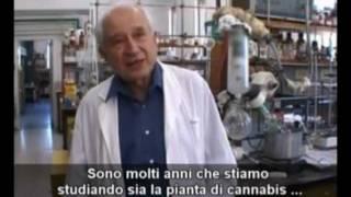 La Vera Storia della Marijuana - di Massimo Mazzucco (vers. integrale)