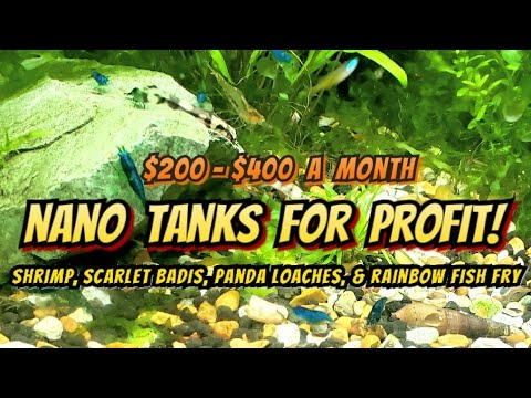 Making Up To $400 Profit A Month In A 10 Gallon Aquarium (From Home) Breeding Shrimp, Fish & Plants.