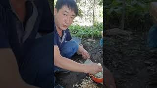 감자 부침개 도전  3탄