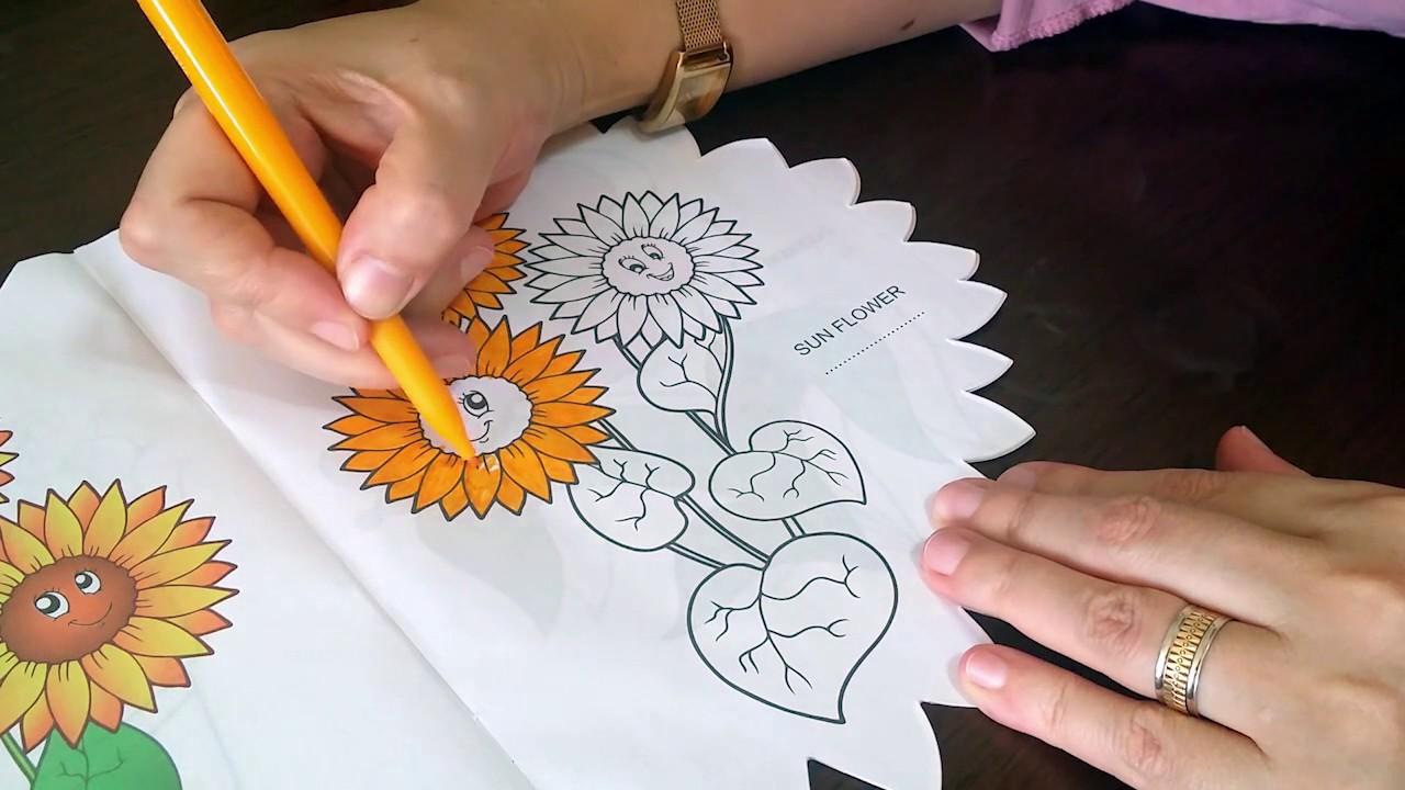 Ayçiçeği Boyama Sayfası çocuklar Için Eğlenceli Videolar Youtube