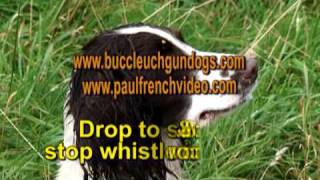 Complete Springer Spaniel Training Series - Film 4