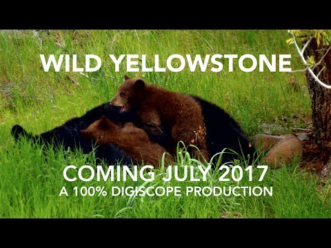 Wild Yellowstone National Park 2017 Preview - Coming July 2017