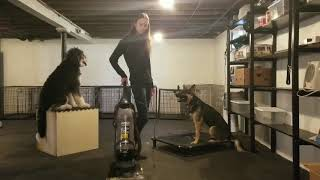 Albany Dog Trainers / Saratoga Dog Trainers / 1.5 Year Old German Shepherd, Mason