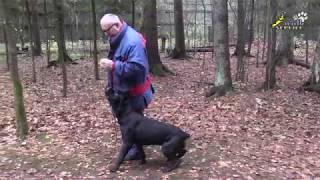 Этика дрессировки собак