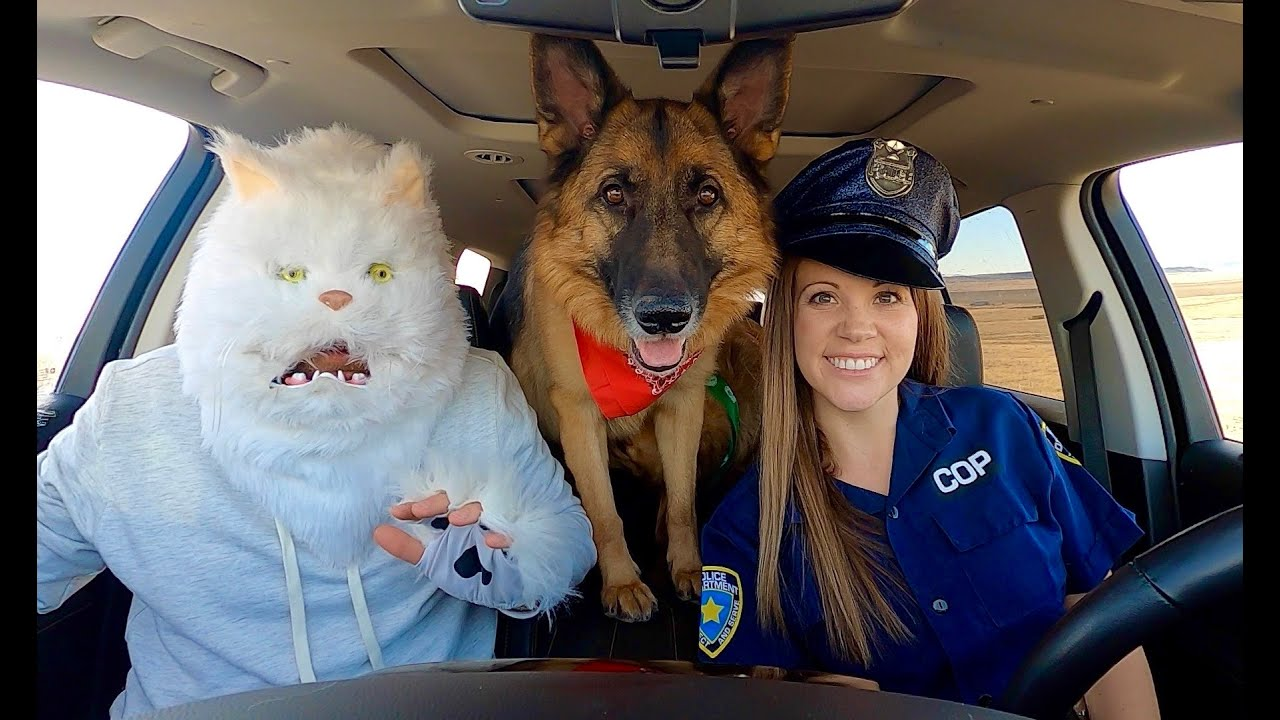 Cat Surprises Police Dog with Dancing Car Ride!
