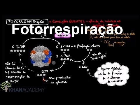 Fotorrespiração | Fotossíntese | Biologia | Khan Academy
