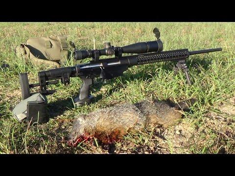 Groundhog Hunt 43 Ruger RPR  243 win 105 gr Berger VLD