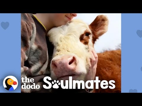 Girl Changes Her Whole Life To Save Her Cow Best Friend | The Dodo Soulmates