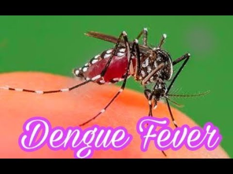 Dengue Fever Song | Symptoms - Causes - Treatment