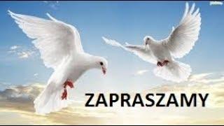 naj popularnirjsze gołębie  w polsce