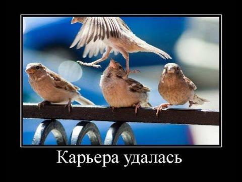 Смешные демотиваторы про живоных!!!